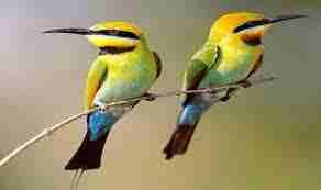 El canto de los pájaros cambia con elpaisaje