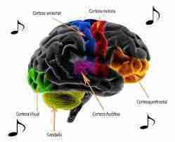 La música y la activación de áreas cerebrales