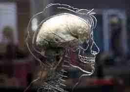 Cerebro y consciencia : Un teatro en la cabeza