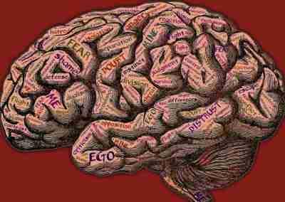 ¿Cómo crea el cerebro una percepción continua de la realidad?